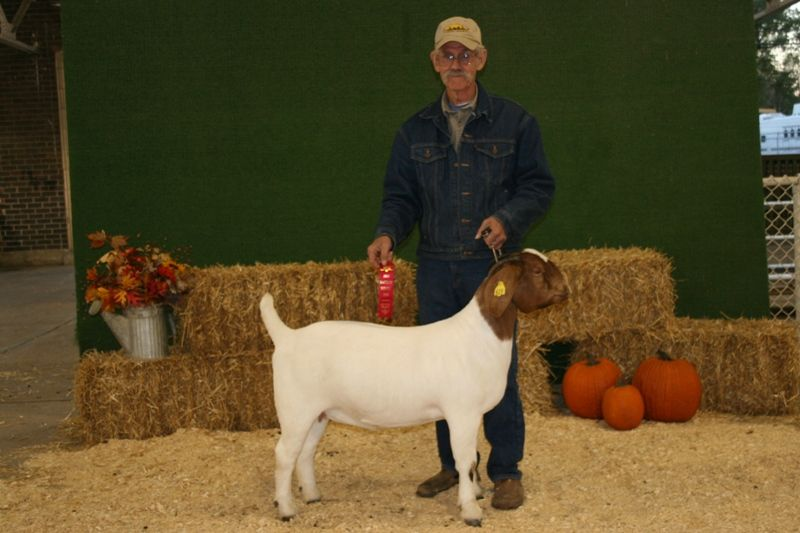 Bear Creek BC B623 Steam's Top Secret - Boer Goat Doe